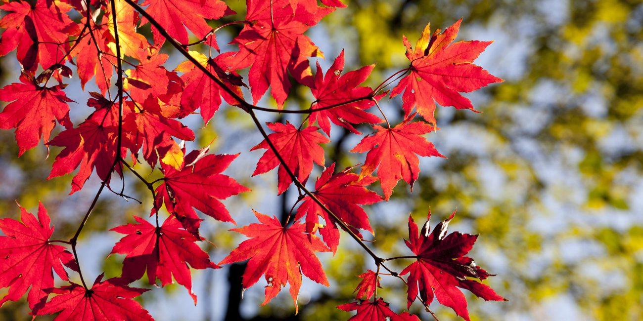 Ubezpiecz się na jesień